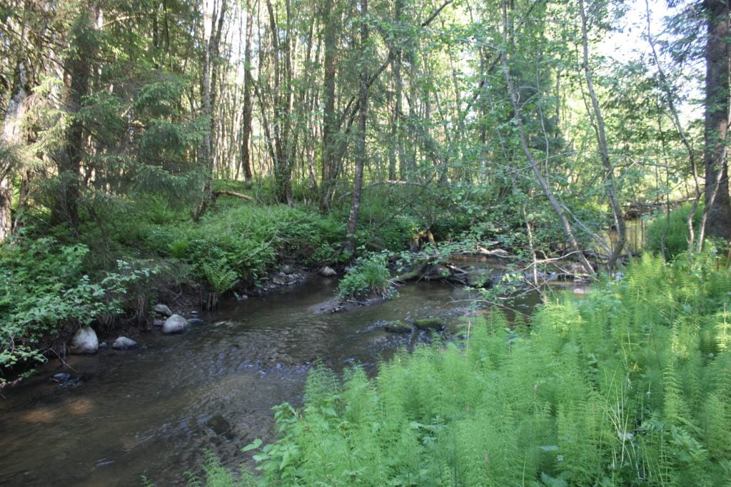 Little stream with vegetated banks and surrounded by forest