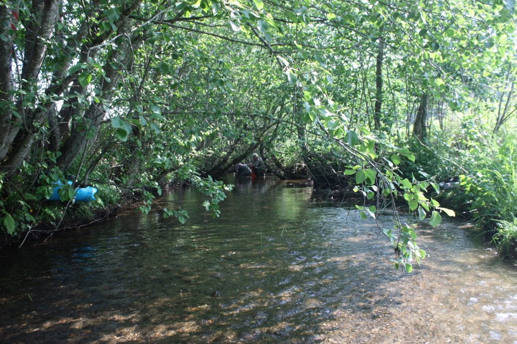 shallow stream with shade-giving trees