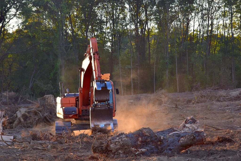 image description. Felling of forests after bark beetle outbreak.
