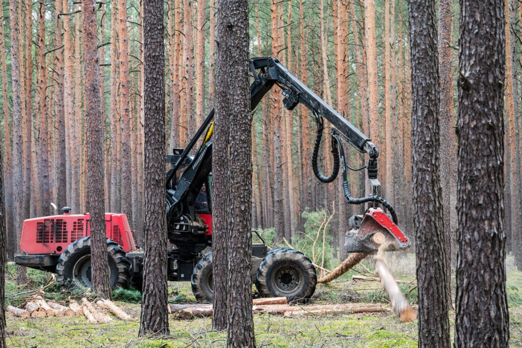Image description. Heavy timber processor portioning Norway spruce after bark beetle attack.