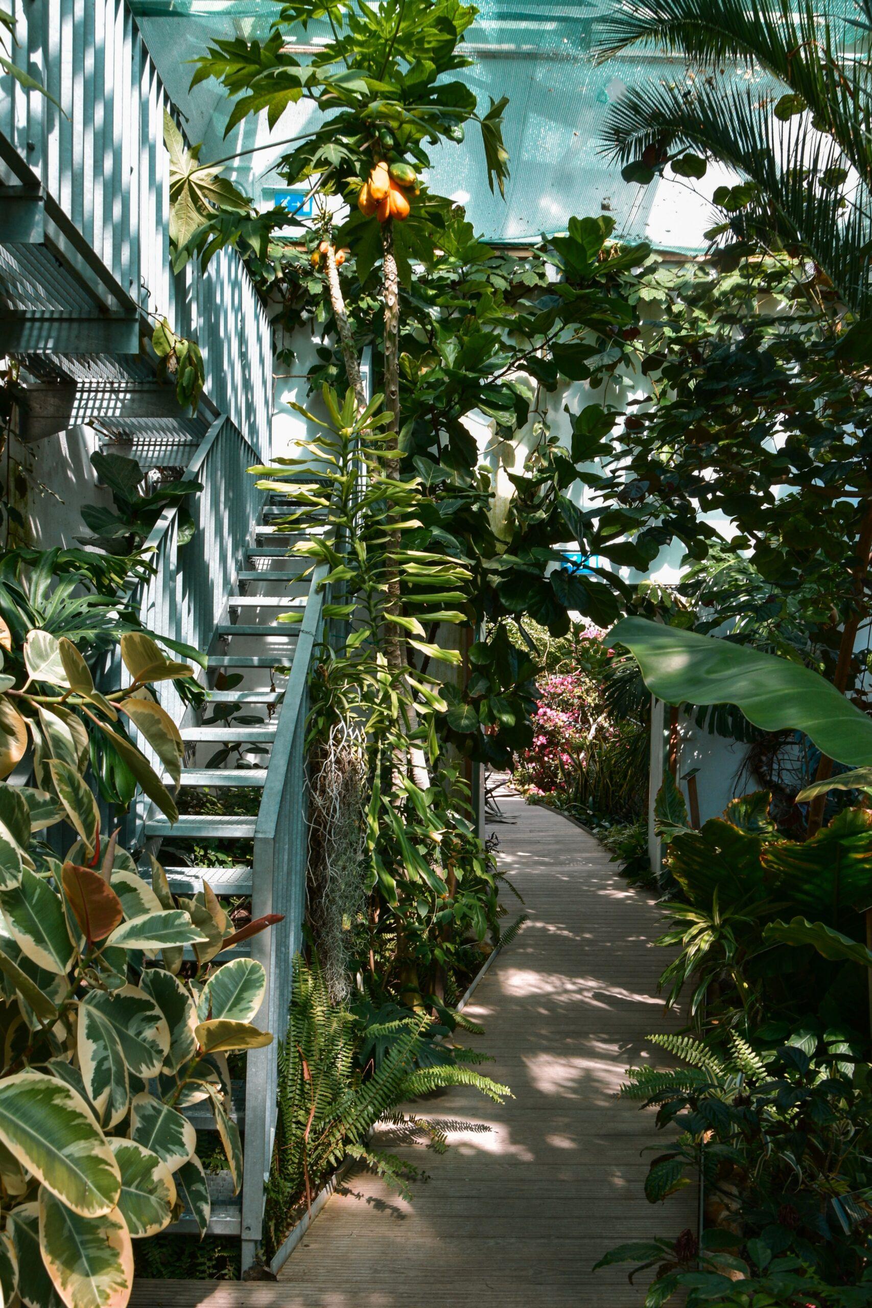 Image description. path through a garden