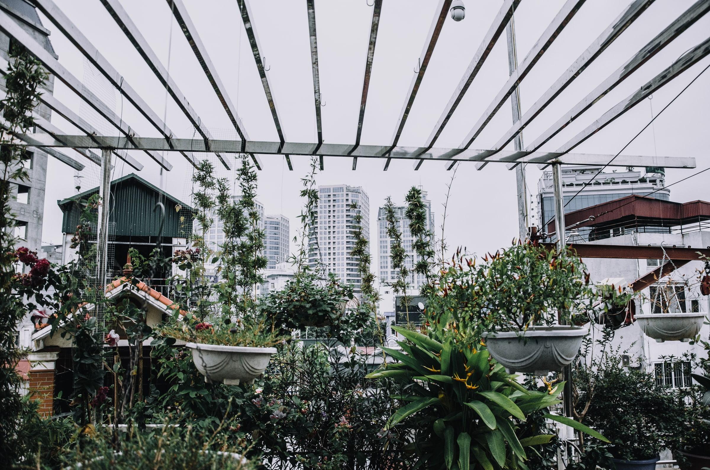 Image description. Plants on a balcony in a large city