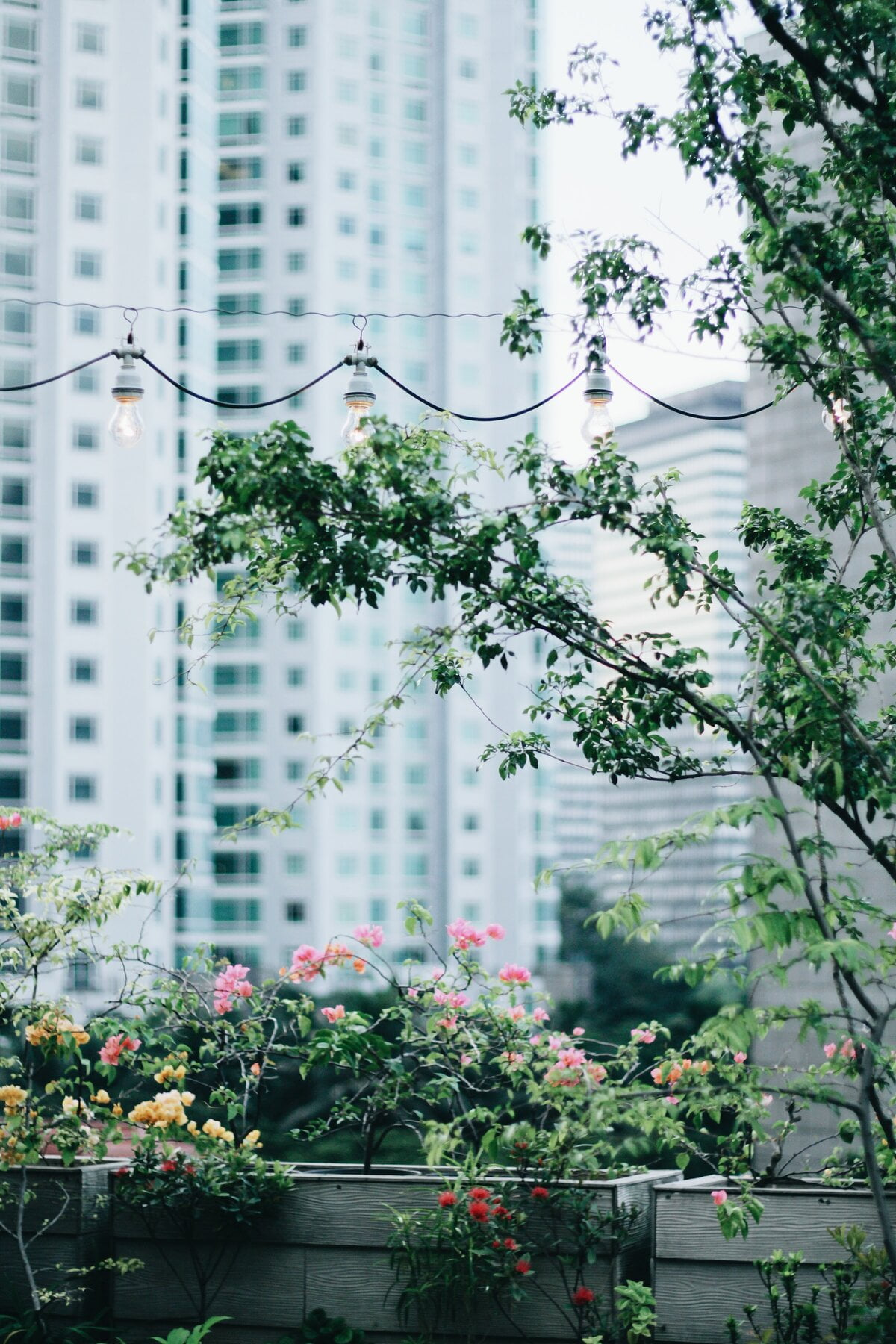 Image description. flowers on a balcony with a skyscraper in the background