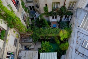 Image description. green urban space in the back of a house