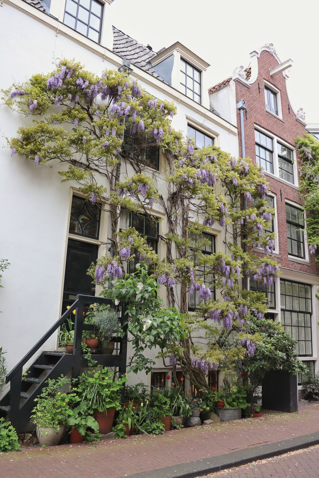 Image description. wisteria growing on the wall of a house