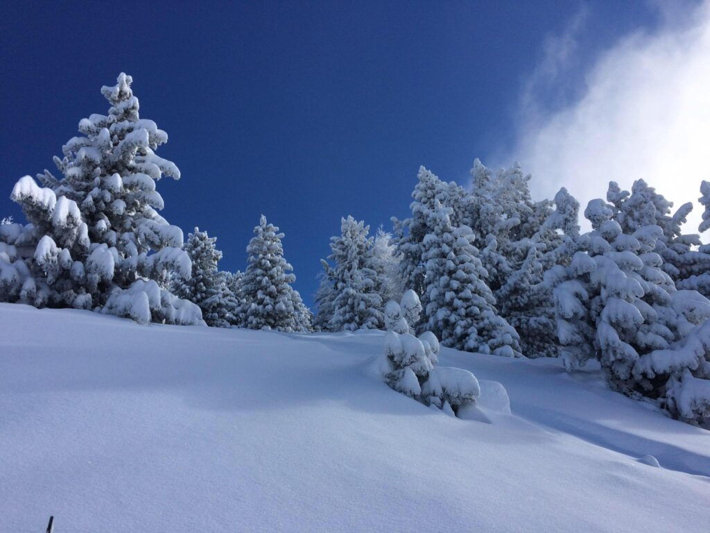 image description. trees covered in fresh snow