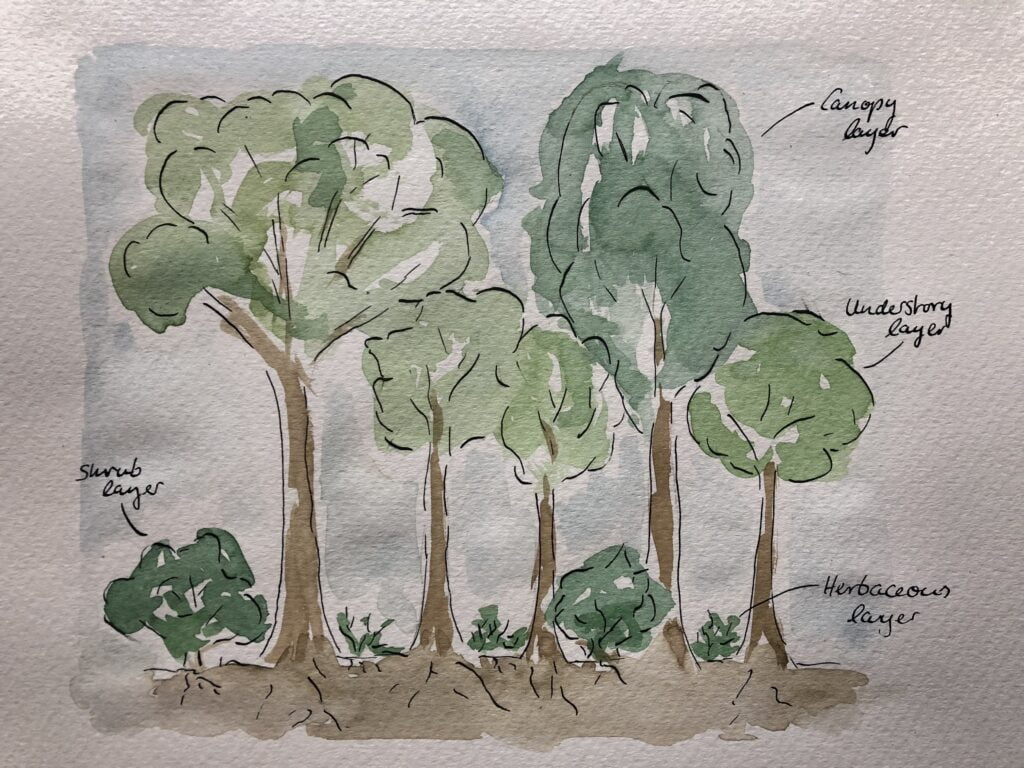Structure of a tiny forest painted in watercolour.