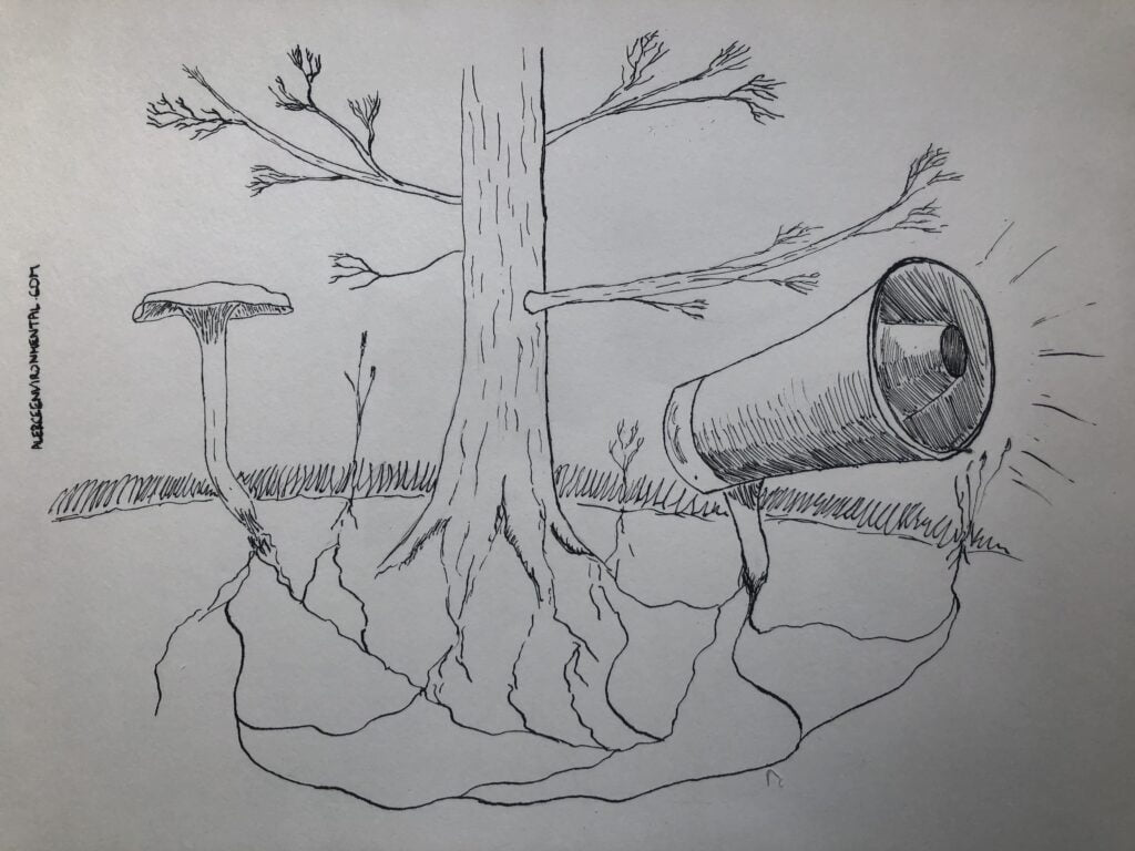 Drawing of communication and fungi: A connection between a mushroom, a tree and a megaphone to symbolise the information flow.